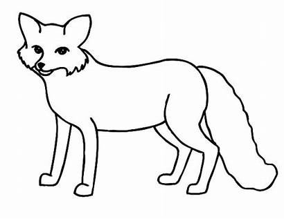 Fox Arctic Coloring Pages Artic Clipart Thin
