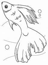 Fische sketch template