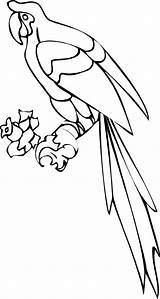 Parrot Coloring Pages Printable Realistic Clip Animal Colouring Monkey Fun Stuff Clipart Pinclipart Word Bestcoloringpagesforkids Getcolorings Popular sketch template