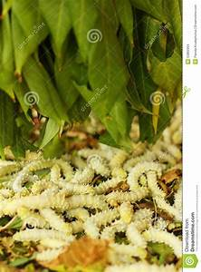 Weiße Dekosteine Garten : frische wei e maden im beh lter am garten stockfoto bild 53865964 ~ Sanjose-hotels-ca.com Haus und Dekorationen