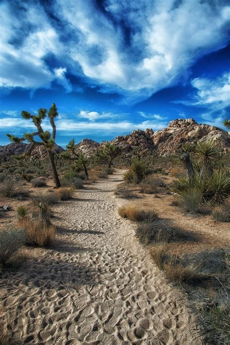 125 Best Images About Joshua Tree National Park