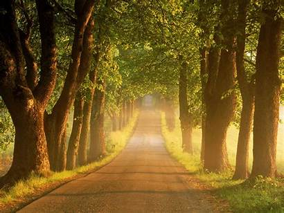 Road Country Tree Roads Sunrise Lined Glory