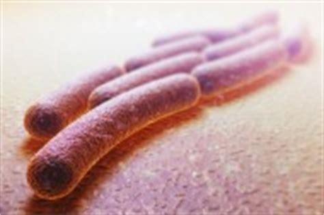 alimentazione per dissenteria l evoluzione recente batterio della dissenteria le