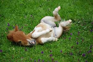 Wochen Berechnen Baby : baby pony 3 wochen alt foto bild tiere tierkinder chrisi 2 bilder auf fotocommunity ~ Themetempest.com Abrechnung