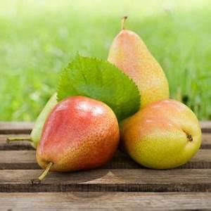 Conservation Des Poires : conserver les poires en hiver et technique de conservation ~ Melissatoandfro.com Idées de Décoration