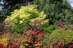 Hochstamm Stachelbeeren Schneiden : kuchenbaum schneiden so machen sie 39 s richtig ~ Lizthompson.info Haus und Dekorationen