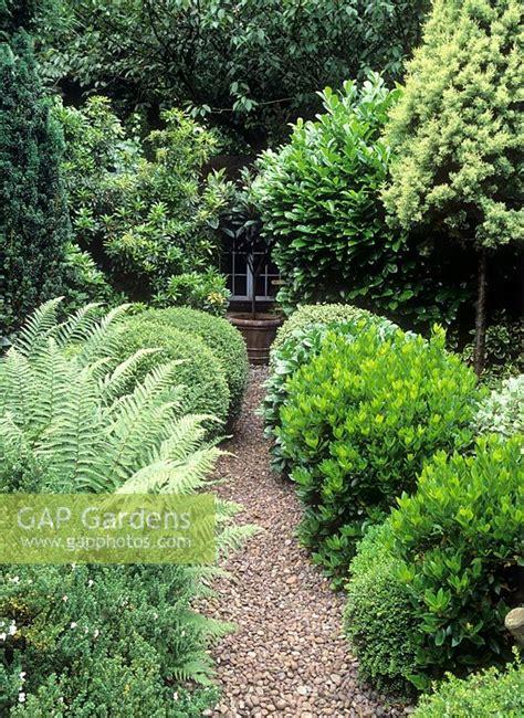 gap gardens evergreen shrubs  ferns  narrow