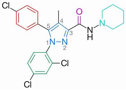 Rimonabant Cannabinoid Receptor Antagonist Cbd Svg Highlighted