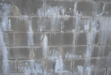 causes of water in basement white mold vs efflorescence differences dangers