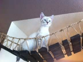 cat bridge indiana jones cat bridge