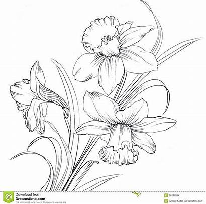 Birth Narcissus Flower Tattoo Month Tattoos Daffodil