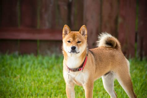 Is Dogecoin A Good Investment Long Term - Dogecoin Price ...