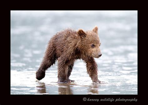 Wildlife Babies; Aka The Cute Zone