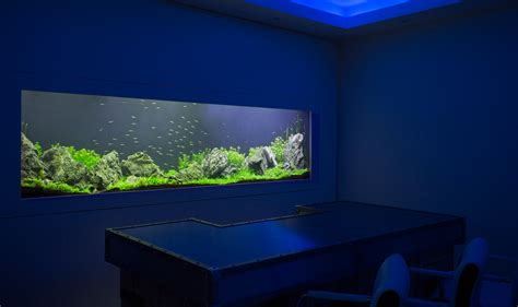 custom aquarium design bespoke designer fish tanks