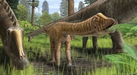 Rare Skull Of Baby Diplodocus Shows How Giant Dinosaurs