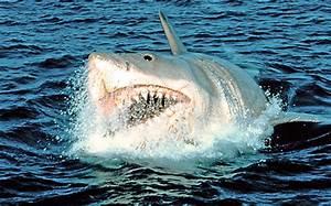 17 Chilling Shark Movies   EW.com