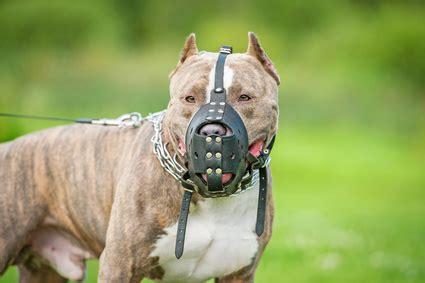 kampfhunde listenhunde anwaltorg