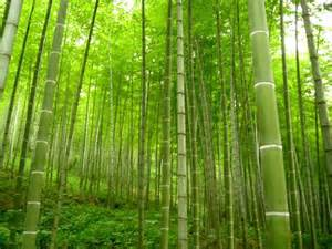 Upcyled Furniture by Xining Bamboo Forest China Dream Culture