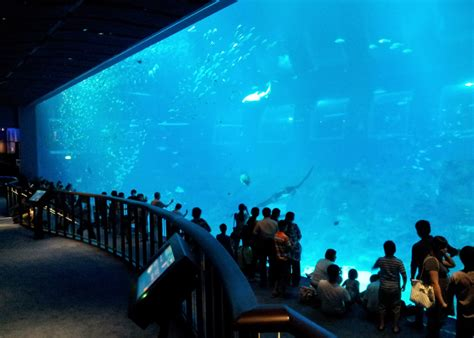 image gallery sea aquarium