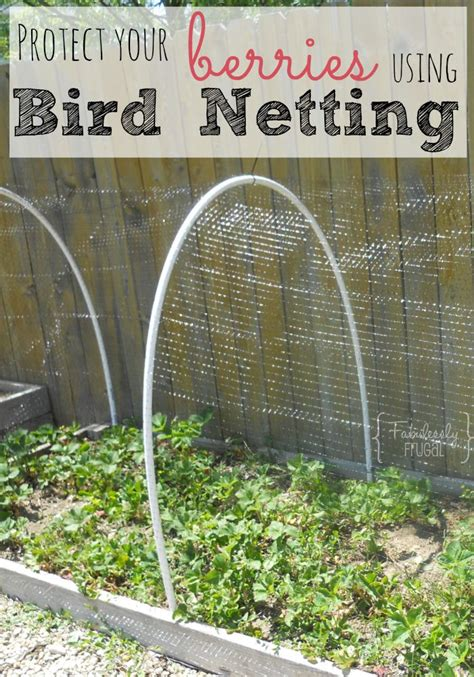 Gardening Bird Netting For Berry Bushes Birds Berries