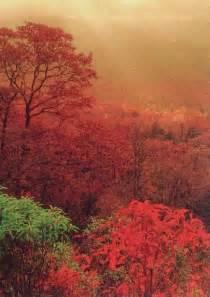 Smoky Mountain Autumn Scenes