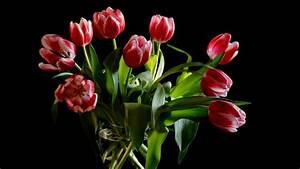 Tulpen In Vase : hd hintergrundbilder tulpen blumen rot zweifarbige vase desktop hintergrund ~ Orissabook.com Haus und Dekorationen