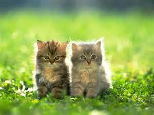 friends of cats sun shines beautifull kitten images