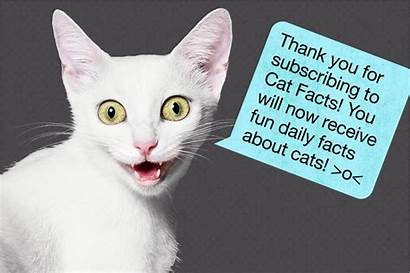 Cat Facts Message History Interview Hollywood Internet