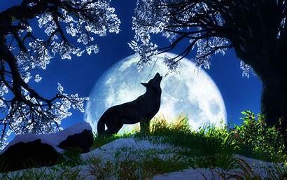 Fox Cool Computer Night Background Backgrounds Wallpapers