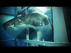 Megalodon Shark Caught on Tape - Japanese Expedition to ...
