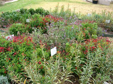 plants for butterfly garden building a butterfly garden denton county master gardener association