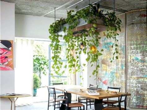 Hanging Plants From Ceiling House Plant Ideas For The Home