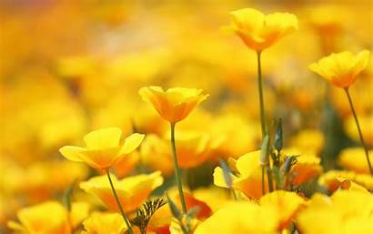 Yellow Flowers Phone Wallpapers 4k