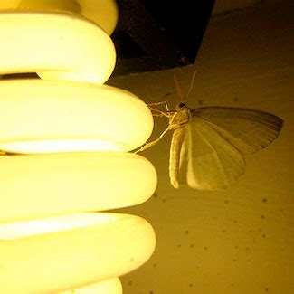 why are bugs attracted to light porch lights attracting bugs choose a better bulb