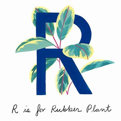 Common Guide Houseplants Plants Rubber
