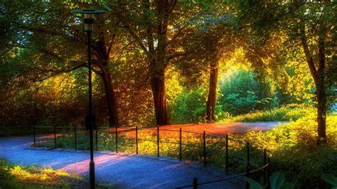 rainbow  autumn trees hd rainbow wallpapers hd