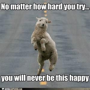 Funny Animal Pictures : Funny Animal Pictures With ...