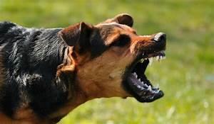 Why Good Dogs Bite - FernDog Training Dog Bites