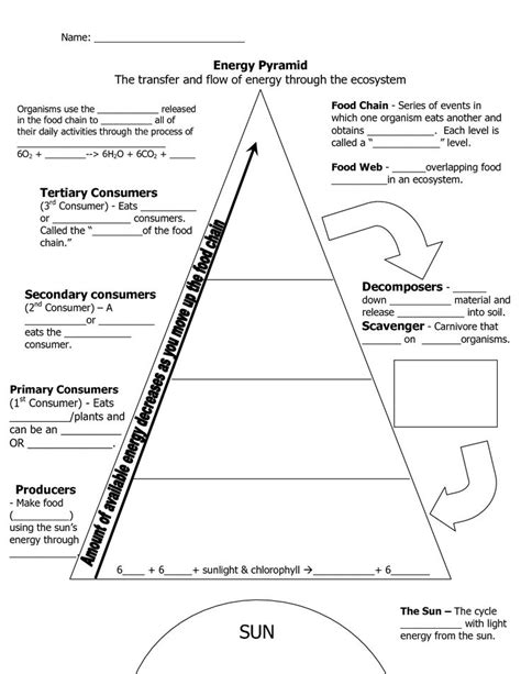 Best 25+ Ecological Pyramid Ideas On Pinterest  Energy Pyramid, Biology Interactive Notebook