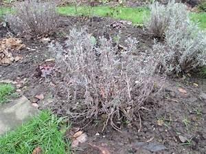 Lavendel Wann Schneiden : wann rhododendron pflanzen wann darf ich rhododendron ~ Lizthompson.info Haus und Dekorationen