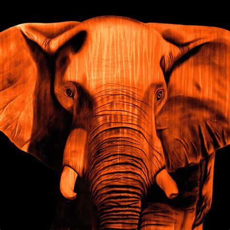 elephant orange