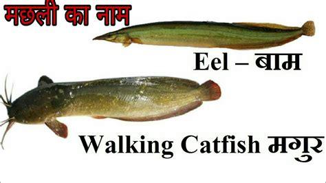 fish names  english  hindi youtube