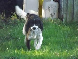 Piege A Rat Castorama : interesting je peux vous prter mon chien with piege a fouine leroy merlin ~ Voncanada.com Idées de Décoration