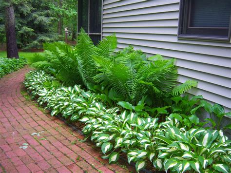 landscape ferns irish garden house mary mary how will your garden grow