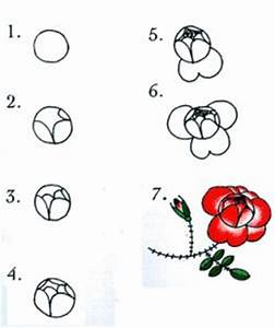 13 best Rose images on Pinterest | How to draw, Draw ...