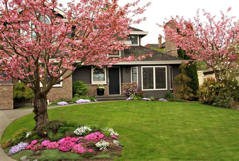 planting trees adds    home exterior