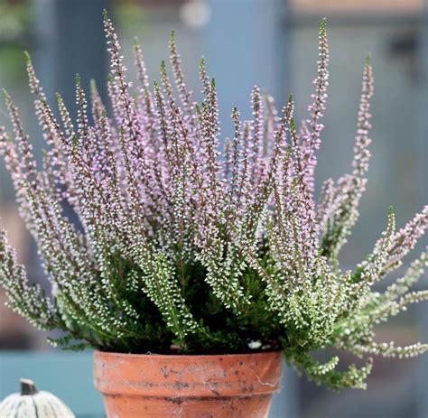 balkonkästen im winter pflanzen die besten balkonpflanzen f 252 r den herbst welt