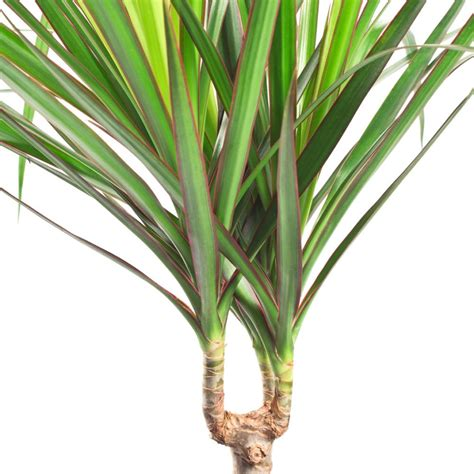 plante verte chambre plantes vertes et fleurs 2017 avec plante verte intérieur