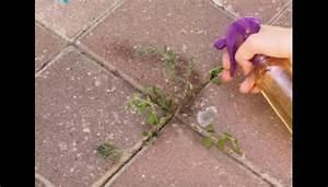 Desherbant Mauvaise Herbe : bye bye mauvaises herbes avec ce d sherbant naturel ~ Premium-room.com Idées de Décoration