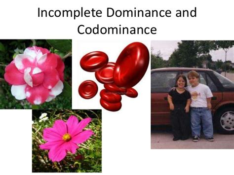 Incomplete And Codominance